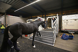 Painted Black  being loaded into the flying stall<br /> Departure of the horses to the World Cup Finals in Las Vegas from Schiphol - Amsterdam 2015.<br />  © Hippo Foto - Dirk Caremans