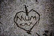 Heart with the words MUM XXX, kisses, carved into the bark of a tree, 17th April 2014, Hampstead, London, United Kingdom.