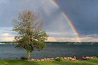 https://Duncan.co/tree-and-broken-rainbow