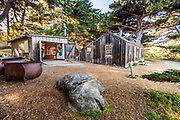 Point Lobos State Reserve, at Whaler's Cove, near Carmel, California, Highway 1,