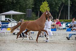 060, Martine E Rona<br /> Nationaal Kampioenschap KWPN<br /> Gelderdse merries<br /> © Hippo Foto - Dirk Caremans<br />  15/08/2020