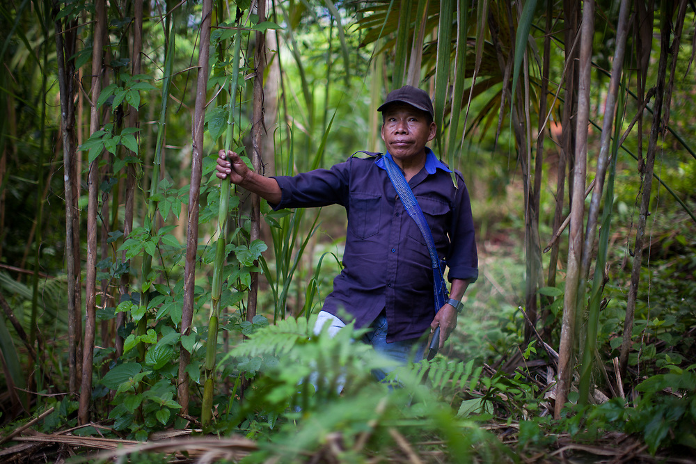 Cristobal Coc, on his demonstration plot.  He has planted papaya, beans, medicinal plants, plantain, coffee, gandule beans and cane for building.