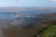 Mud patterns on beach<br /> East coast<br /> GUYANA<br /> South America