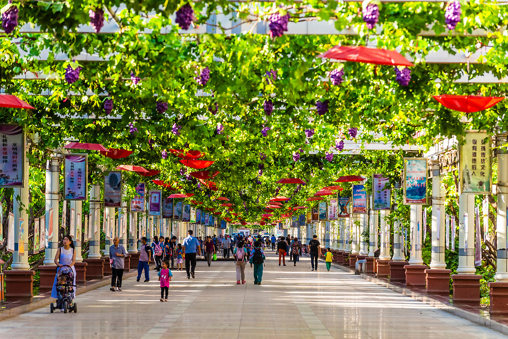A pedestrian street covered with a grape arbor in Turpan, Xinjiang Province, China. Turpan is a small oasis town and former Silk Road 30m above sea level. It is known as the city of grapes.