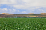 Irrigation of crops in San Joaquin Valley. Fresno County, California, USA