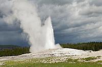 Old Faithful Erupting, Yellowstone National Park Wyoming