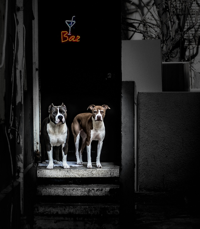 Two dogs acting as bouncers at the bar entrance in Tel Aviv
