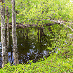 Spring along the Lamprey River in Epping, New Hampshire.