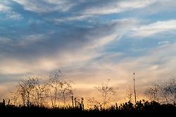 Silhouette of prairie grasses at dusk, Stella Rowan Prairie, Fort Worth, Texas USA.