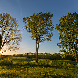 The morning sun shines through the trees on the edge of a hay field at Emery Farm in Durham, New Hampshire.