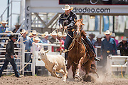 Tie Down Roping rider Timber Moore ropes his calf during the Cheyenne Frontier Days rodeo at Frontier Park Arena July 24, 2015 in Cheyenne, Wyoming. Frontier Days celebrates the cowboy traditions of the west with a rodeo, parade and fair.
