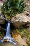 Waterfall at the First Palm Oasis, Borrego Palm Canyon, Anza-Borrego Desert State Park, California.