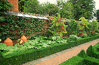 potager garden with sheltered wall growing peaches in an espalier fan