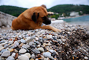 Close up of pebble beach, with dog rolling over in background. Lapad Bay, Dubrovnik, Croatia