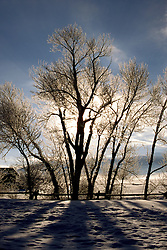WY: Grand Teton National Park, trees in winter        .Photo Copyright: Lee Foster, lee@fostertravel.com, www.fostertravel.com, (510) 549-2202.Image: wygran218