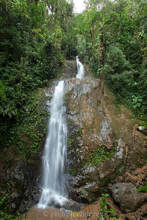 Water fall, Cloud Forest, Mashpi Reserve, Distrito Metropolitano de Quito, Ecuador