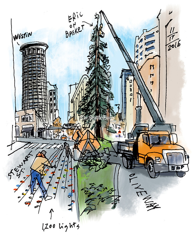 Eric Greenberg puts on a safety harness and climbs into a basket to get closer to the top of the giant sequoia tree on Fourth Avenue. (Gabriel Campanario / The Seattle Times)