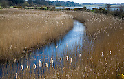 Drainage ditch and reedbeds, Martlesham Creek, River Deben, Suffolk, England