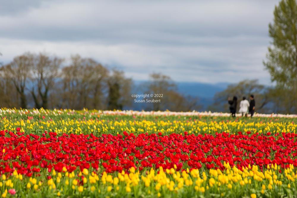 The Wooden Shoe Tulip Fesival in Woodburn, Oregon