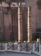 Theatre of Marcellus, Rome, Italy