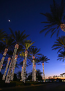 """SHOT 12/18/2007 - Palm trees lit up for Christmas in front of the Westin Resot in Scottsdale, Az. Scottsdale is a city in Maricopa County, Arizona, United States, adjacent to Phoenix. Scottsdale has become internationally recognized as a premier and posh tourist destination, while maintaining its own identity and culture as """"The West's Most Western Town."""" What had, in the twentieth century been vacant desert, was converted to urban or suburban environment. The 2000 Census found the city's population to be 202,705, while according to the 2007 Census Bureau estimates, the population of the city was 240,410. .(Photo by Marc Piscotty/ © 2007)"""
