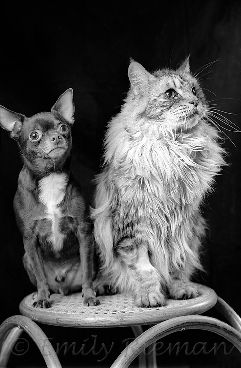 Portrait of a dog and cat shot on black and white film.