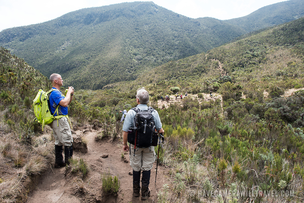 Hikers in the heath zone on Mt Kilimanjaro's Lemosho Trail.