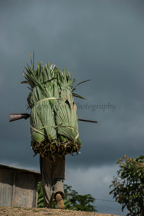 Konyak Naga carrying palm leaves to be used for roofing<br /> Konyak Naga headhunting Tribe<br /> Mon district<br /> Nagaland,  ne India