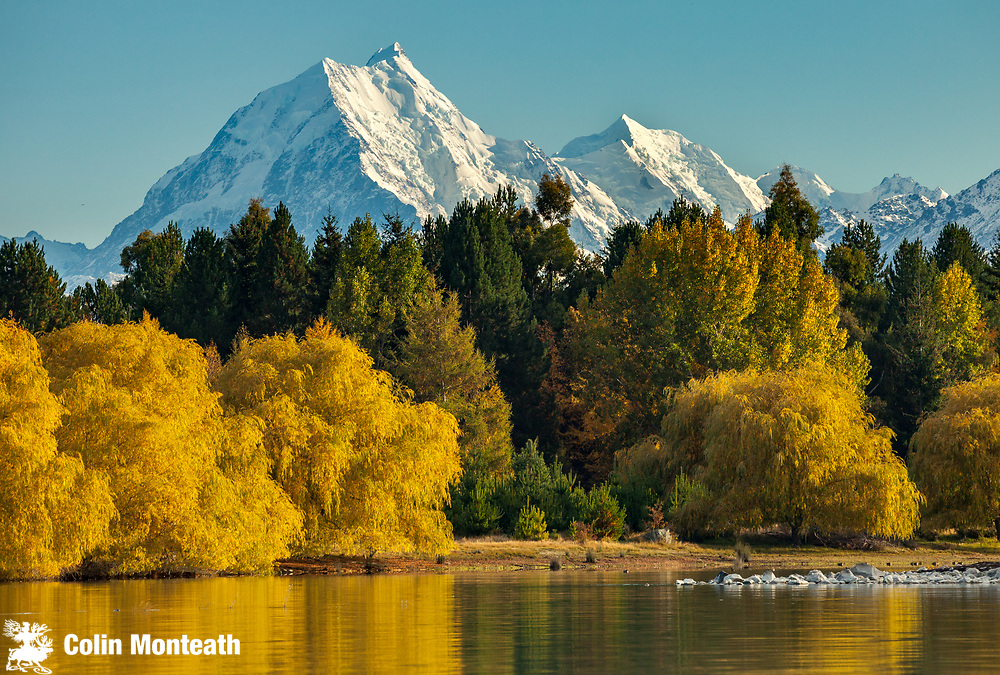 Aoraki Mt Cook (left) and Mt Tasman east faces, willow and poplar trees in autumn colours beside Lake Pukaki, Mackenzie country, South Canterbury