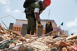 Sept. 9, 2017  Juchitan, Mexico - A rescue worker and his dog search at the building collapse site after an earthquake hit in Juchitan, Oaxaca state. A powerful earthquake measuring 8.2 on the Richter scale struck off Mexico's southern coast late Thursday night, killing 90 people. (Credit Image: © Dan Hang/Xinhua via ZUMA Wire)