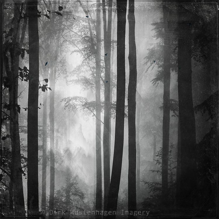 Mystical moody and foggy forest scenery on a summer day - photograph edited with texture overlays<br /> Available as print & more  in my Redbubble shop --> https://www.redbubble.com/shop/ap/80752329?ref=studio-promote