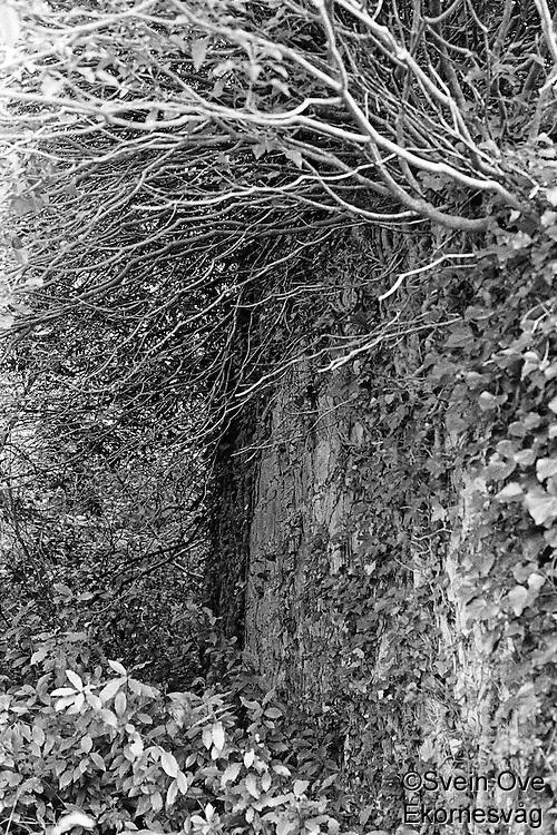 Kroatia 2012-06.<br /> Bak trær og busker i en skog på Lopud i Kroatia kan man skimte en gammel ruin.<br /> Foto: Svein Ove Ekornesvåg