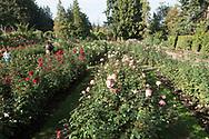 The International Rose Test Garden in Forest Park in Portland, Oregon, USA