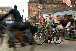 Jeffrey Tayler works his way through the endless traffic of humanity and livestock that crowds the streets of one of India's holiest cities, Varanasi December, 2006.
