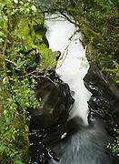 The Chasm, along Highway 94, Milford Sound (Piopiotahi), Fiordland National Park, New Zealand