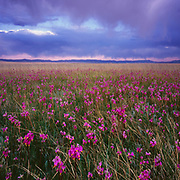 Shooting Stars and Clearing Storm, Ruby Lake National Wildlife Refuge, Nevada