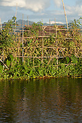 Villagers grow a variety of fruit and vegetables at the floating garden in Inle Lake, Shan state, Myanmar