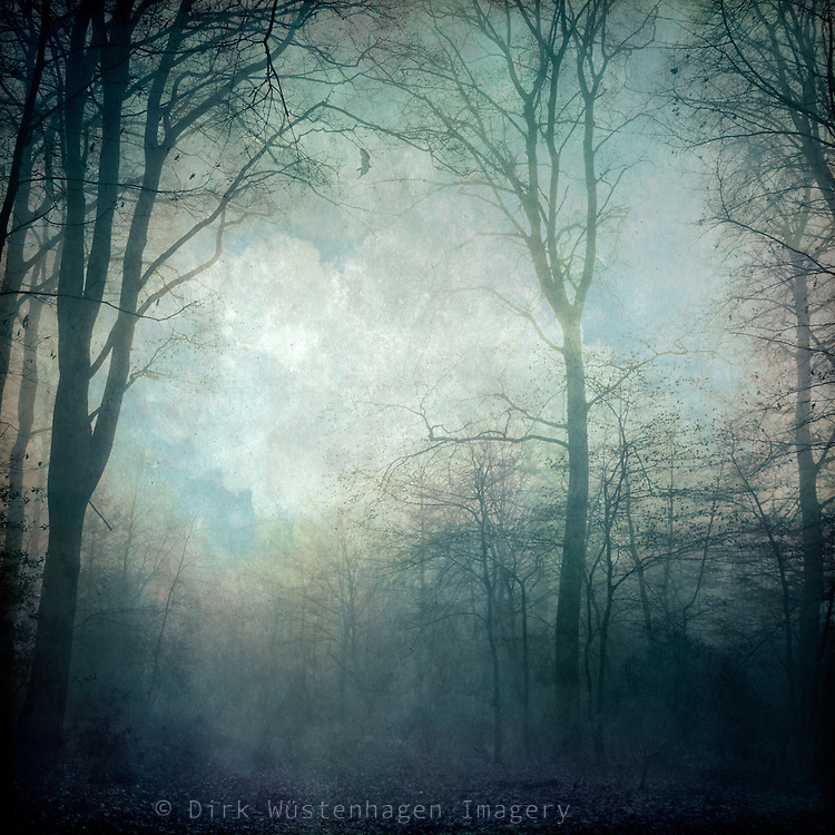 Moody forest scenery on a hazy day<br /> Textured photography