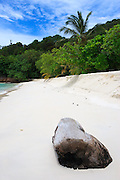 Log on beach - Pulau Redang, Malaysia <br />