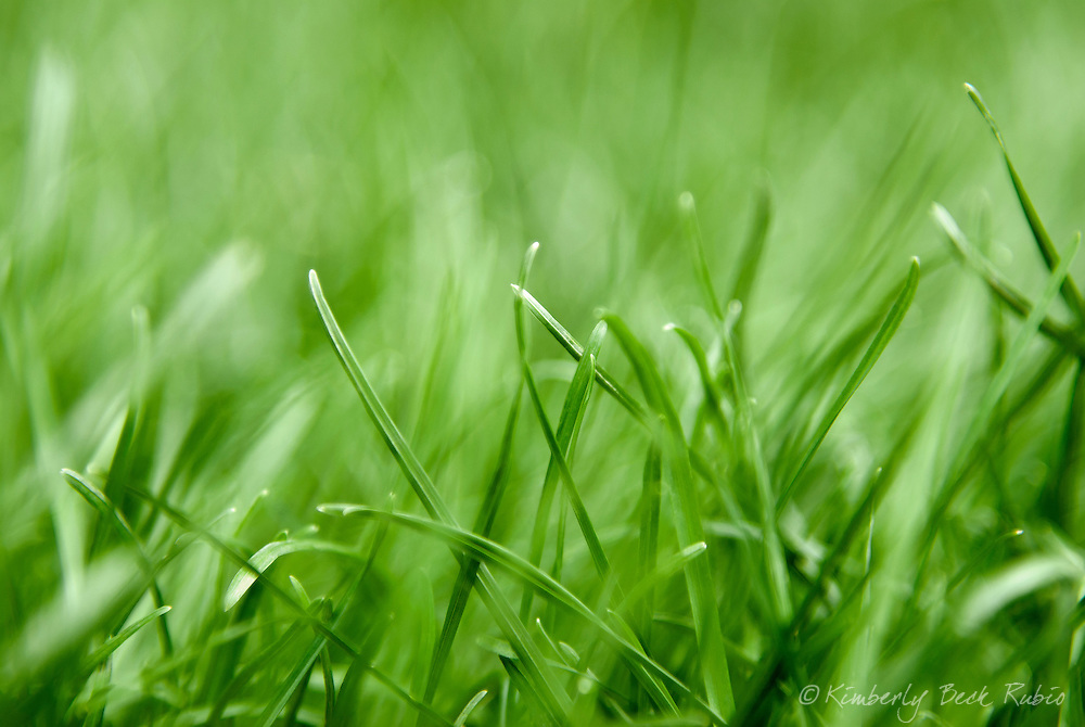 Close up of a lawn...