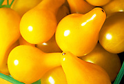 Extreme close up, selective focus photograph of Yellow Pear tomatoes