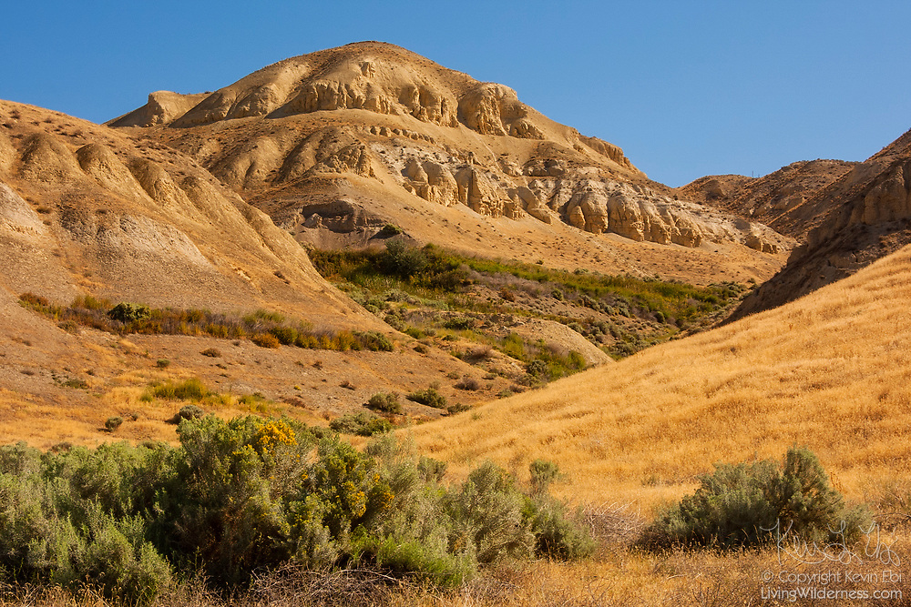 The Ringold Formation, a series of bluffs overlooking the Columbia River near Pasco, Wasington, preserves fossils dating back to the Neogene period and is part of the Hanford Reach National Monument.