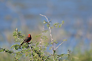 Birding photography from Texas Coastal Birding Trail