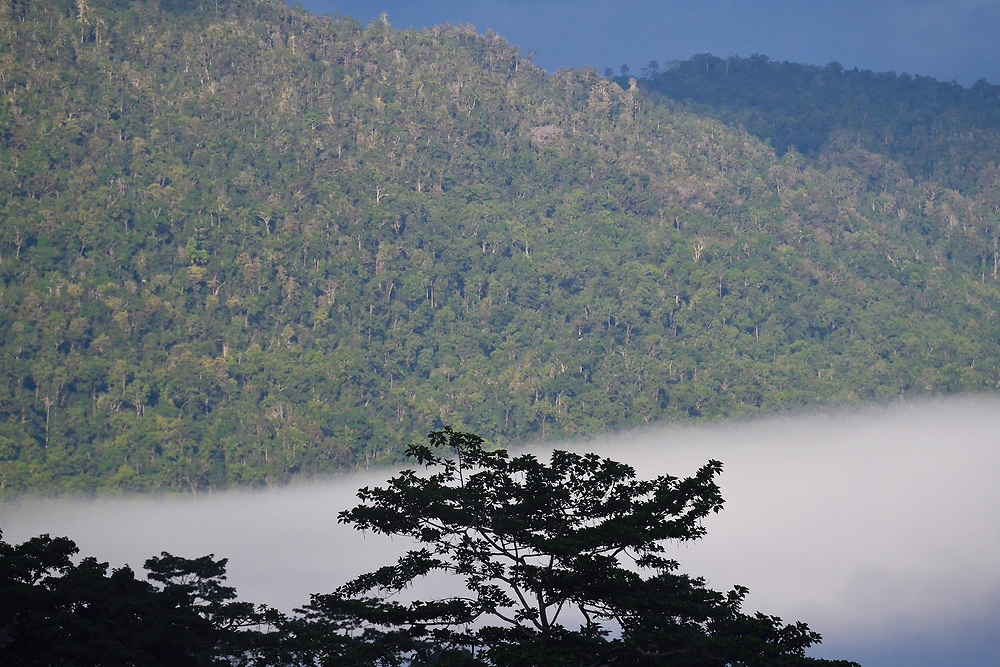 """Morning mists in the rainforest near Lobo village, Triton Bay, mainland New Guinea, Western Papua, Indonesian controlled New Guinea, on the Science et Images """"Expedition Papua, in the footsteps of Wallace"""", by Iris Foundation"""