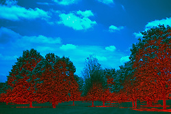 18 May 2015:   Rollingbrook Park in east Bloomington Illinois at high noon on a partly cloudy day.<br /> <br /> <br /> Image shot with Cokin 89B Filter and post processed for Infrared