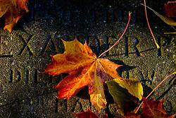 Autumn leaves lying on an old gravestone at Melrose Abbey, Melrose. Scottish Borders<br /> <br /> (c) Andrew Wilson | Edinburgh Elite media