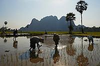 Myanmar (ex Birmanie), Province de Karen, environs de Hpa-an, riziere // Myanmar (Burma), Karen state, around Hpa-an, rice field