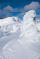 Ice encased trees or Krummholz on the summit of Three Brothers Mountain, Manning Provincial Park British Columbia Canada