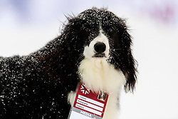 February 9, 2019 - Re, SWEDEN - 190209 A dog with a media accreditation at men's downhill during the FIS Alpine World Ski Championships on February 9, 2019 in re..Photo: Joel Marklund / BILDBYRN / kod JM / 87853 (Credit Image: © Joel Marklund/Bildbyran via ZUMA Press)