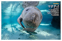 "PDF Days Japan 6 page article ""Hello Manatees"" by Carol Grant"